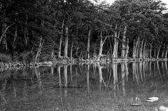 Frio河反射柏树中央得克萨斯生态系 免版税图库摄影