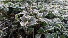 Frio do inverno Fotografia de Stock