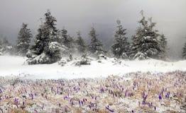 Frio e vento Imagens de Stock