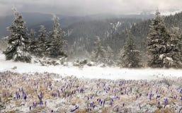 Frio e vento Fotografia de Stock Royalty Free
