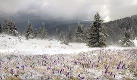 Frio e vento Imagens de Stock Royalty Free