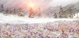 Frio e vento Foto de Stock Royalty Free