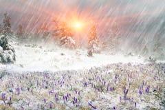Frio e vento Imagem de Stock Royalty Free