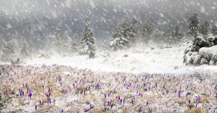 Frio e vento Imagem de Stock