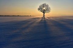 Frio, mas noite colorida do inverno em Lituânia Foto de Stock Royalty Free