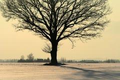 Frio, mas noite colorida do inverno em Lituânia Foto de Stock