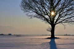 Frio, mas noite colorida do inverno em Lituânia Imagem de Stock
