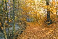 Frio verde fresco bonito da água das árvores de floresta do outono Foto de Stock