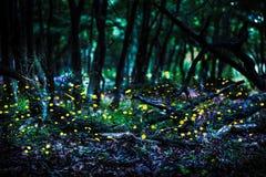 Frireflies飞行在黄昏的森林里 免版税库存图片