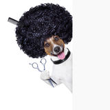 Frisör   hund royaltyfri foto