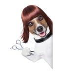 Frisörhund arkivbilder