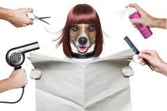 Frisörhund fotografering för bildbyråer