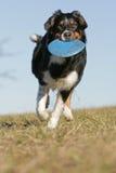 frisbee bawić się Zdjęcie Royalty Free
