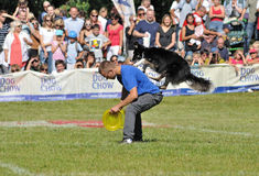 Frisbee competition Royalty Free Stock Photo