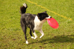 Frisbee fun Stock Images