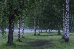 Frisbee golf course. On a bright summer evening with some mist in the air. Savonlinna, Finland Stock Image