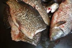 Frisch abgezogene Karpfenfische Stockfotografie