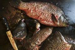 Frisch abgezogene Karpfenfische Lizenzfreie Stockbilder