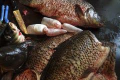 Frisch abgezogene Karpfenfische Lizenzfreie Stockfotografie