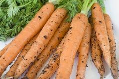 Frisch ausgewählte einheimische Karotten Stockfotos