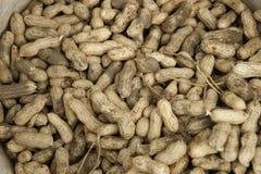 Frisch ausgewählte Erdnüsse stockfotografie
