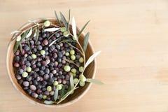 Frisch ausgewählte Oliven Stockfoto