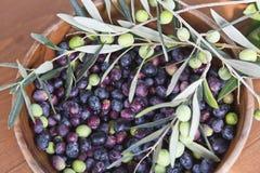 Frisch ausgewählte Oliven Stockbilder