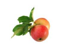 Frisch ausgewählte organische Äpfel Lizenzfreies Stockfoto