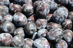 Frisch ausgewählte organische reife köstliche blaue Pflaumen, unscharfer Hintergrund Lizenzfreie Stockfotos