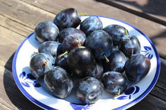 Frisch ausgewählte organische reife köstliche blaue Pflaumen Unscharfer Hintergrund Lizenzfreie Stockfotos