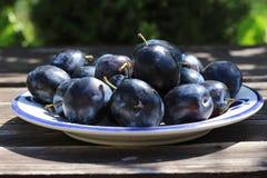 Frisch ausgewählte organische reife köstliche blaue Pflaumen Unscharfer Hintergrund Stockbilder