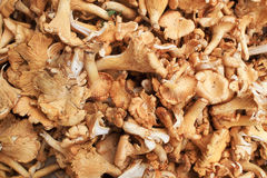 Frisch ausgewählte Pilze Lizenzfreies Stockbild