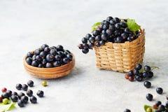 Frisch ausgewählte schwarze Johannisbeeren Lizenzfreies Stockbild