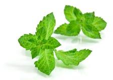 Frisch-ausgewählte tadellose Blätter Stockfoto