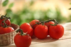 Frisch ausgewählte Tomaten Stockfoto