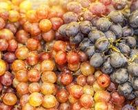 Frisch ausgewählte Trauben Getrennt Stockfotos