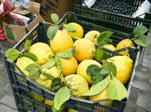 Frisch ausgewählte Zitronen im Korb Stockbild