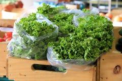 Frisch-ausgewählter Kopfsalat in den Plastiktaschen Lizenzfreies Stockfoto