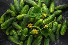 Frisch ausgewählter organischer Gurkenerntehintergrund, Beschaffenheit stockfoto