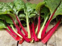 Frisch ausgewähltes Grün und Rot farbiger Mangold Stockfoto