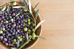 Frisch ausgewählte Oliven Stockfotografie