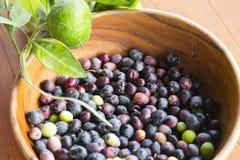 Frisch ausgewählte Oliven Stockbild
