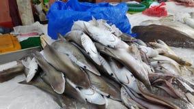 Frisch catched zwergartiger Haifisch lizenzfreie stockfotografie