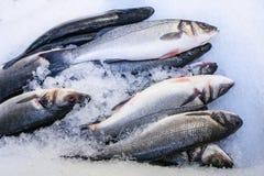 frisch?? Fische Lizenzfreies Stockfoto
