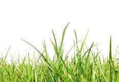 Frisch-Frühling-grün-Gras Lizenzfreie Stockbilder