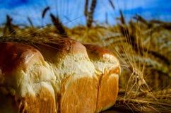 Frisch gebackenes Brot auf dem Hintergrund stockbild