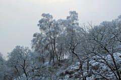Frisch gefallener Schnee auf Bäumen Lizenzfreie Stockfotografie