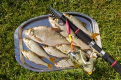 Frisch gefangene Fische. Stockbild