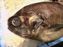 Frisch gefangene Fische auf dem Eis drapiert in der Nahaufnahme lizenzfreie stockfotos