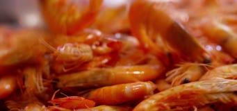 Frisch gefangene Garnelen stock video